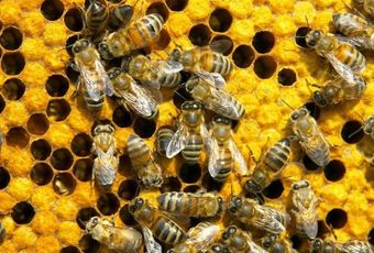 Russia on the honey market. Trends. Statistics.